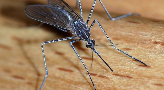 Pseudocast #209 – Štípance komárov, banka posledného súdu