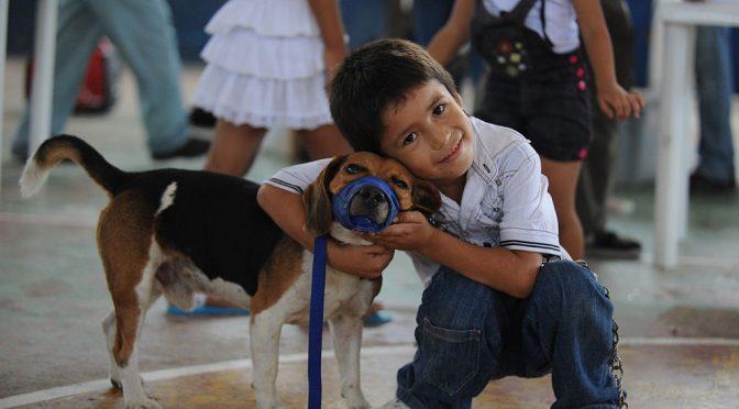 Pseudocast #243 – Objímanie psov, nervový bypas, efektívnejší solárny panel