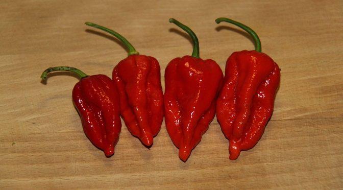 Pseudocast #265 – Nebezpečenstvá chilli, kalórie v alkohole