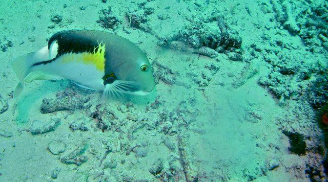 Pseudocast #299 – Ryby používajú nástroje, naklonené borovice, gravity blanket, oživovanie mŕtvych
